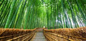 Arashiyama Bamboo Grove, Kyoto, Japan © Noppakun | Dreamstime 66919839