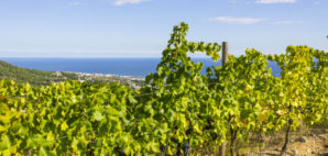 Alella Vineyards, Spain © Hans Geel | Dreamstime
