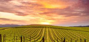 Napa Valley © Michael Warwick | Dreamstime