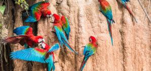 Peruvian Amazon © Pixattitude | Dreamstime
