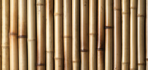 bamboo © Dave Bredeson | Dreamstime
