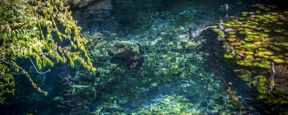 Cenote © Melanie Marriott | Dreamstime
