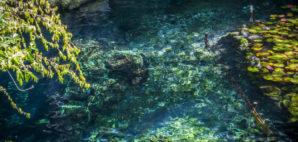 Cenote © Melanie Marriott   Dreamstime