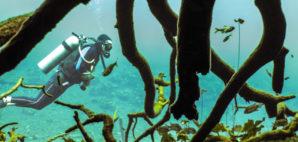 Diving in Cenote © James Kelley | Dreamstime