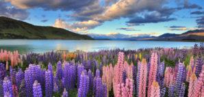 New Zealand © Mohd Nadly Aizat Mohd Nudri | Dreamstime