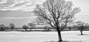 Winter © Brett Critchley | Dreamstime