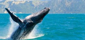 Whale © Konart | Dreamstime.com