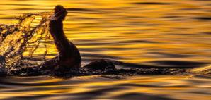 swimmer © Landd09 | Dreamstime.com