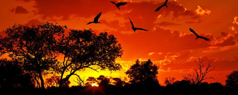 Africa © Anna Om | Dreamstime.com