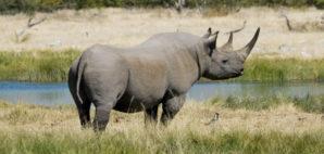 Rhino © Mzedig | Dreamstime.com