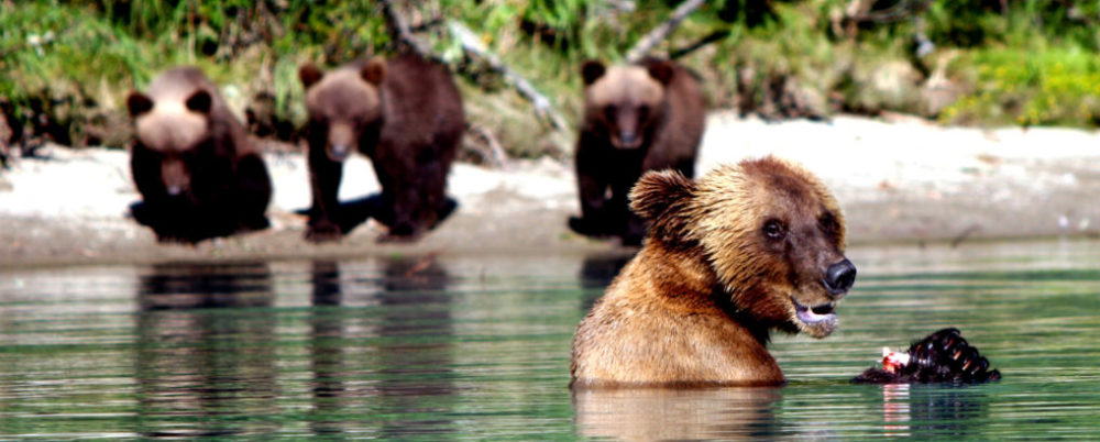 bears © Steve Weber | Dreamstime.com