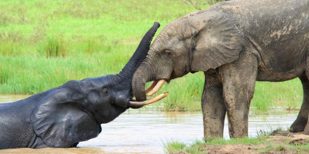 afrikas beste nationalparks
