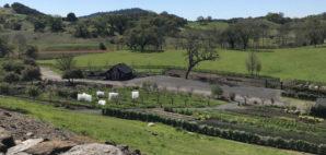 Jordan Winery