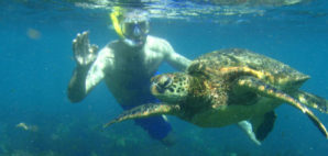 Snorkeling with a sea turtle in the Galapagos islands of Ecuador