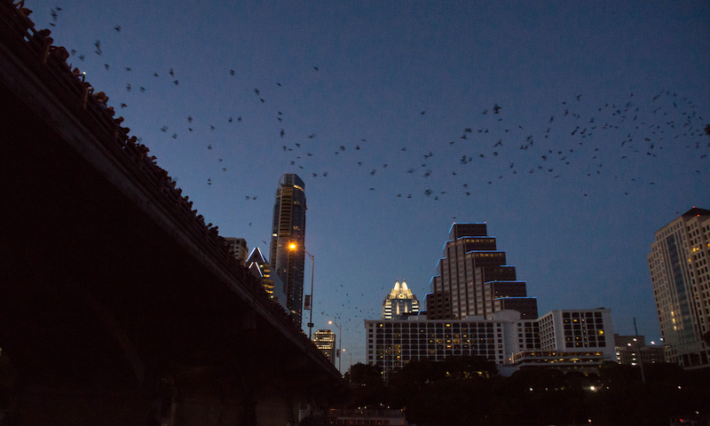 Bats of Austin's Congress Avenue Bridge